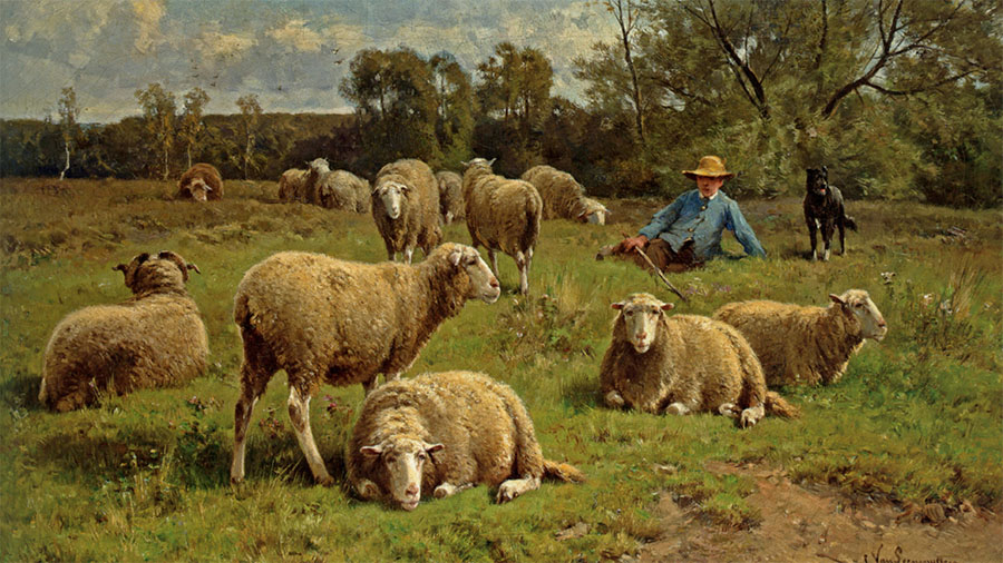 sheep and the shepherd