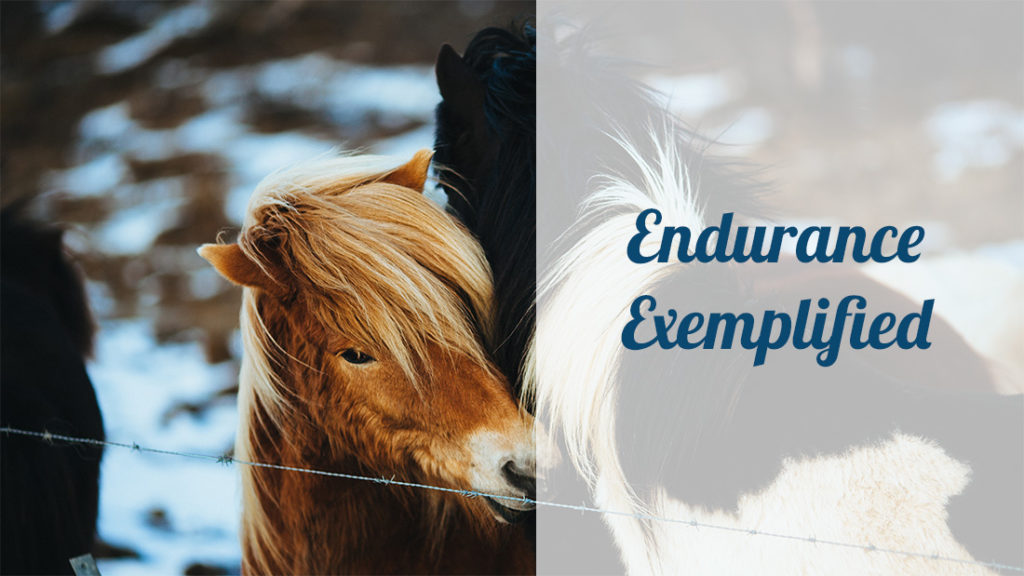 endurance exemplified