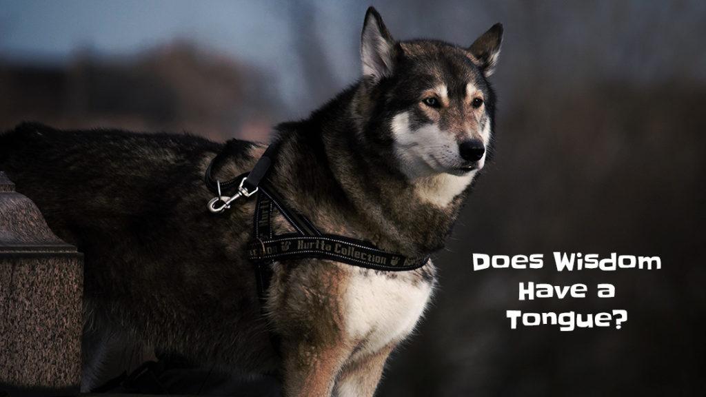 wisdom has a tongue