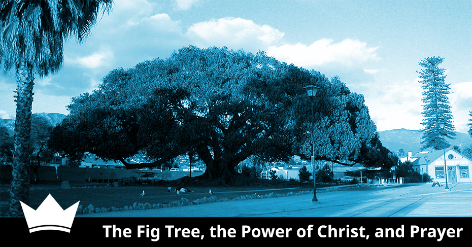 The Fig Tree, the Power of Christ, and Prayer